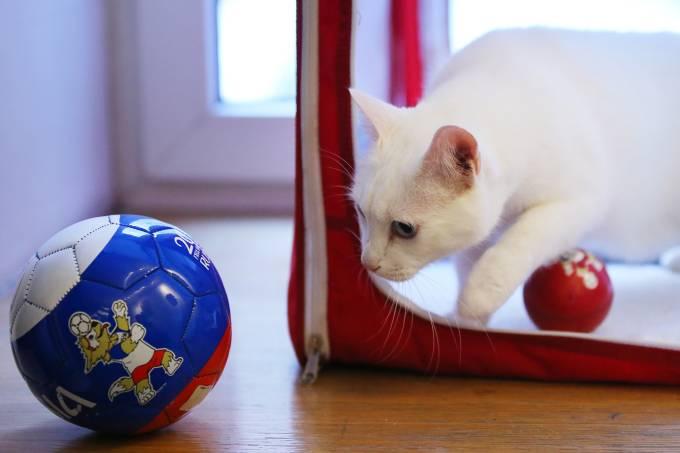 Aquiles, o gato vidente da Copa do Mundo da Rússia