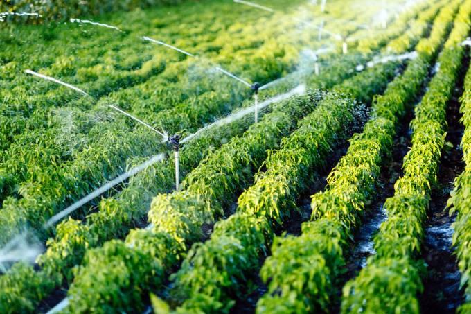Irrigação de agriculturas