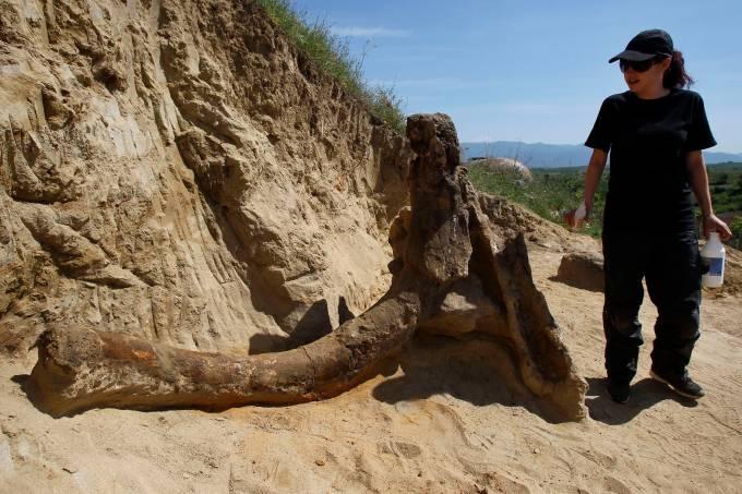 Fóssil de elefante