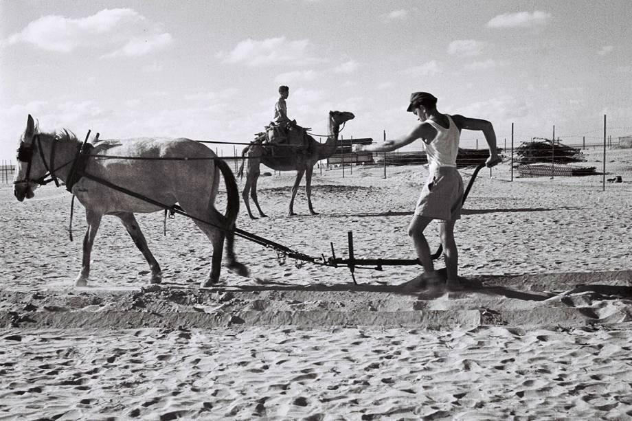 Pioneiros preparam terra para cultivo de vegetais - 01/07/1947