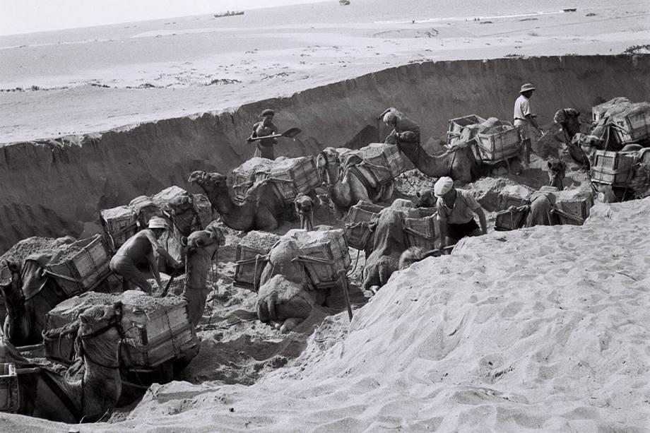 Trabalhadores judeus utilizam camelos para transportar materiais utilizados em construções - 01/06/1939