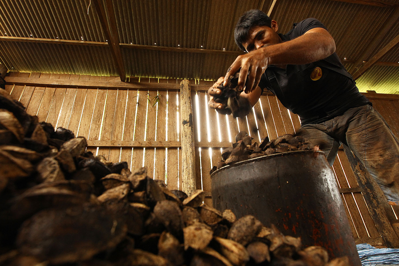 Venda da castanha foi principal pilar da política Florestania, criada pelo governo do PT
