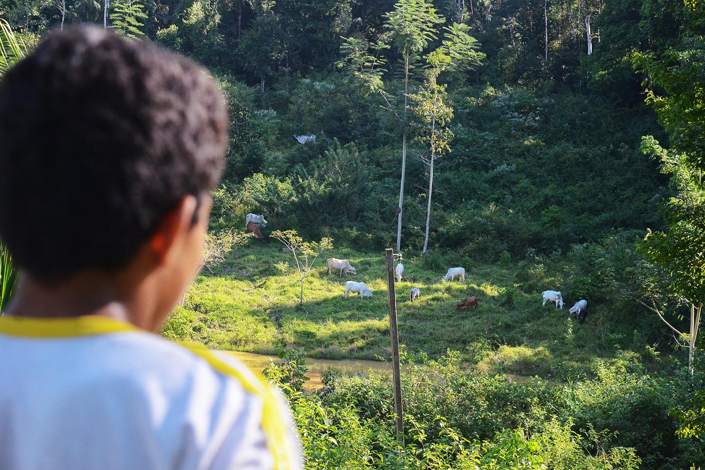 Nova geração: Criança observa gado no pasto na Reserva Extrativista Chico Mendes