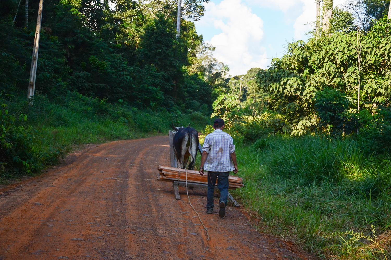 Plano de manejo madeireiro é alternativa para desenvolvimento sustentável na reserva
