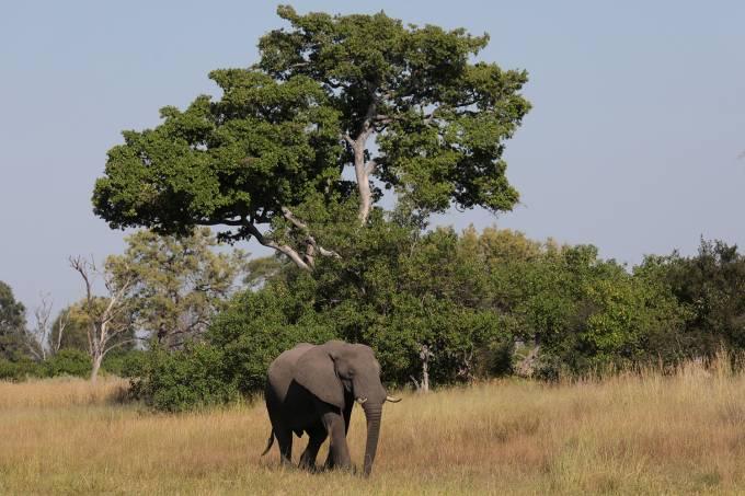 Filhote de elefante em Okavango Delta, Botswana