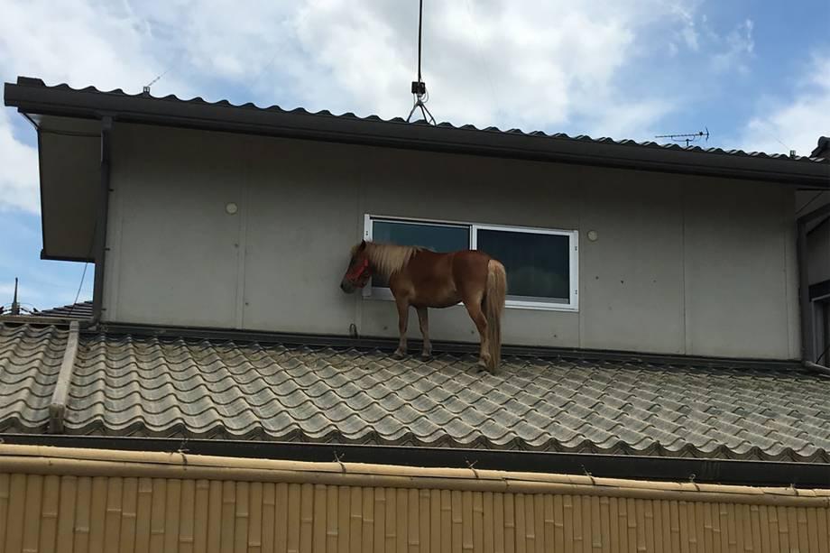 Imagem divulgada pela ONG Peace Winds Japan mostra um cavalo sobre o telhado telhado de uma casa devido às recentes inundações na área de Mabicho em Kurashiki, prefeitura de Okayama, no Japão - 09/07/20189