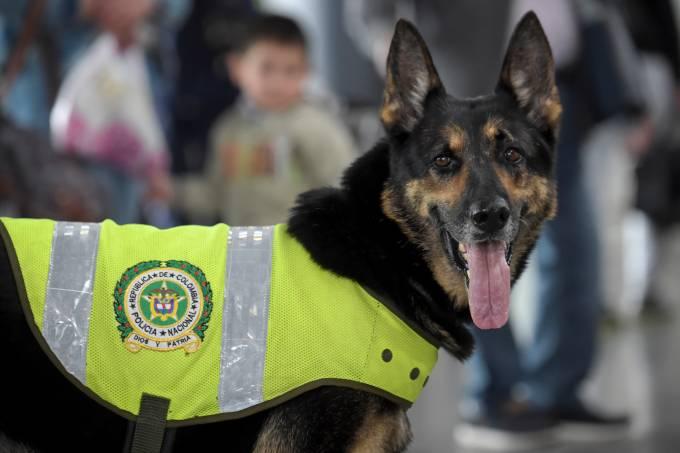 Cadela Sombra da Polícia de Bogotá
