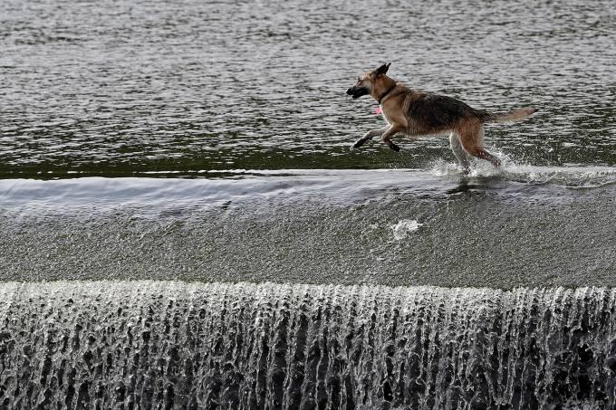 Cachorro corre pelo rio Berounka em Cernosice, República Tcheca