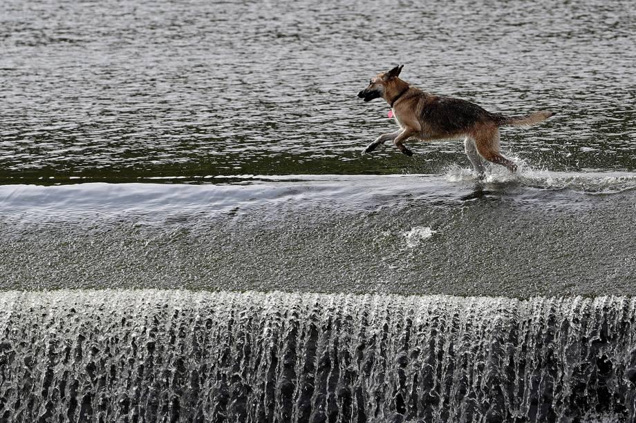 Cachorro corre pelo rio Berounka em Cernosice, República Checa - 22/07/2018