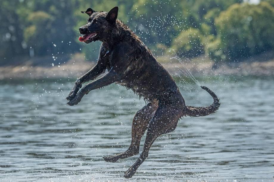 Cachorro brinca no rio Rhine em Biebesheim, Alemanha - 31/07/2018