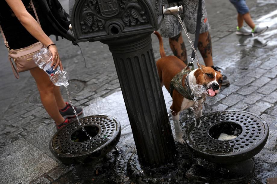 Cachorro bebe água em fonte pública em Madri, Espanha - 02/08/2018