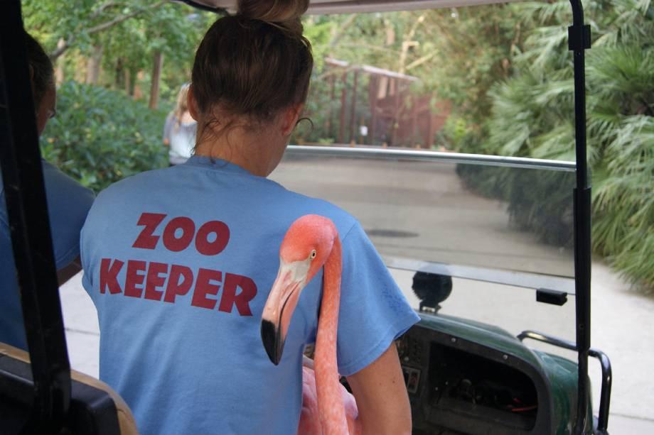 Flamingos são evacuados do Zoológico Riverbanks, durante a passagem do furacão Florence no estado americano da Carolina do Sul - 13/09/2018