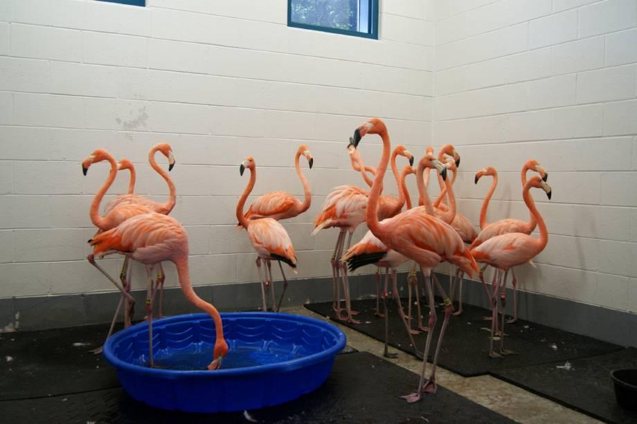 Flamingos são abrigados como parte dos preparativos para a chegada do furacão Florence no Riverbanks Zoo and Garden na Carolina do Sul - 13/09/2018