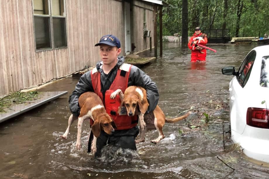 Membros Guarda Costeira resgatam animais de estimação encalhados pela água da enchente causada pelo furacão Florence perto de Riegelwood, Carolina Norte - 16/09/2018
