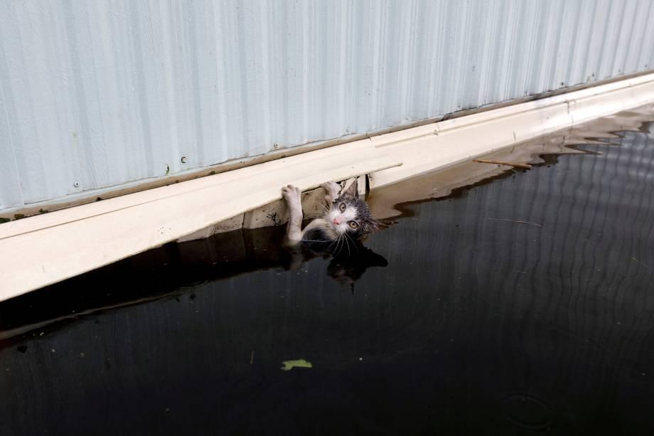 Gato se agarra a um trailer em meio a uma inundação antes de ser resgatado em Burgaw, na Carolina do Norte - 17/09/2018