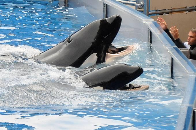 Orcas no SeaWorld
