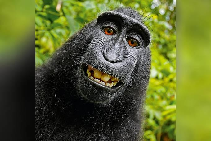 Macaco Naruto