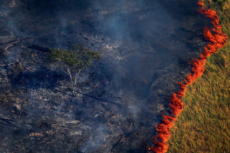 Queimadas na Amazônia e o aumento do desmatamento | VEJA