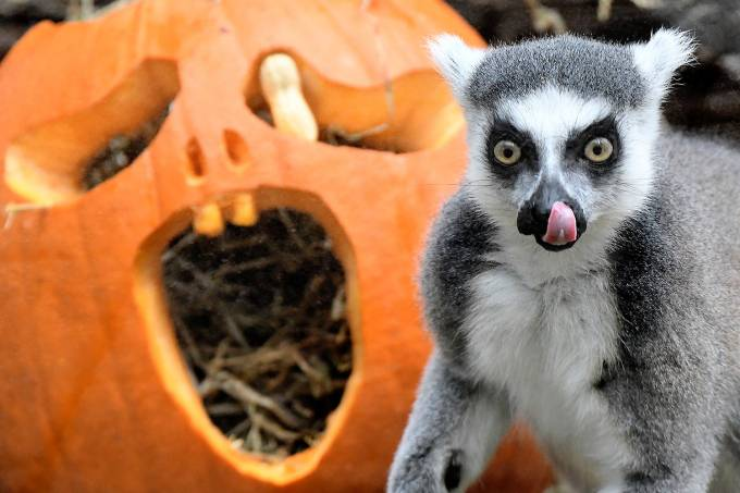 Halloween animal