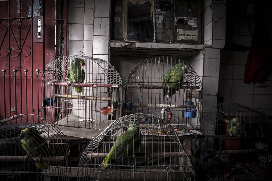 Detentor da maior biodiversidade do planeta, 90% dos animais contrabandeados no Brasil são pássaros
