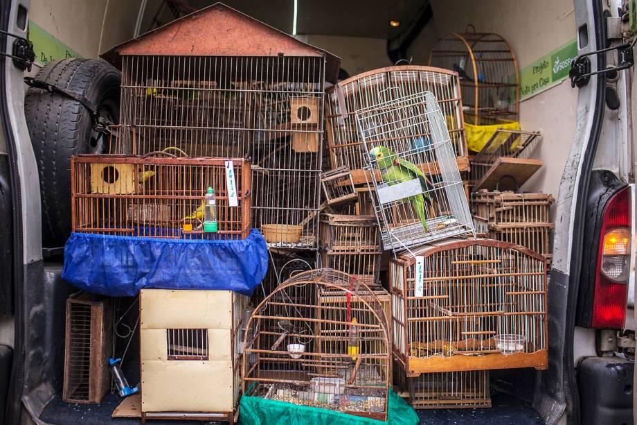 O que fazer com os animais após a apreensão é um problema tão grande quanto aquele que o precede