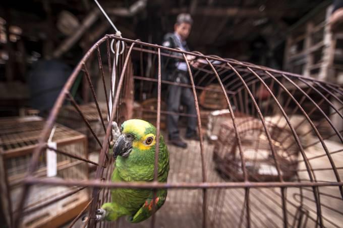 Tráfico de animais em Diadema (SP)
