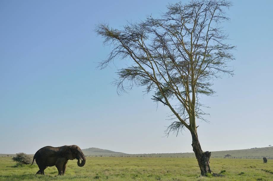 Elefante é visto no Lewa Wildlife Conservancy, parque localizado em Nairóbi, capital do Quênia - 21/05/2015
