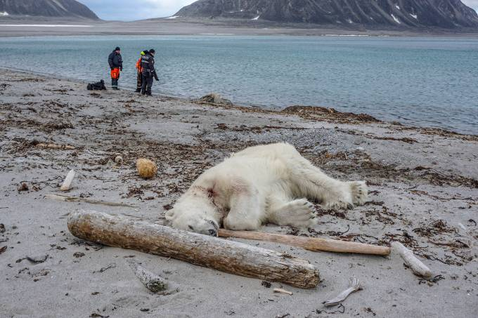 WWF: Humanidade eliminou 60% da população animal desde 1970