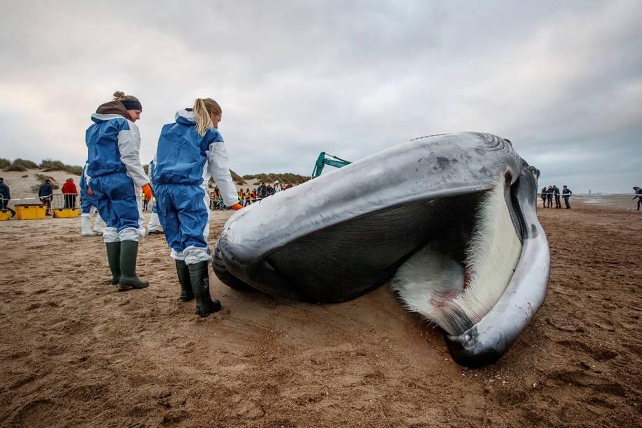 A foto de 25 de outubro mostra o cadáver de uma baleia na praia em De Haan, Bélgica