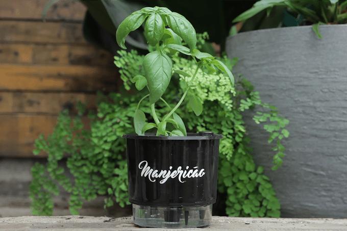 Manjericão – vaso auto irrigável