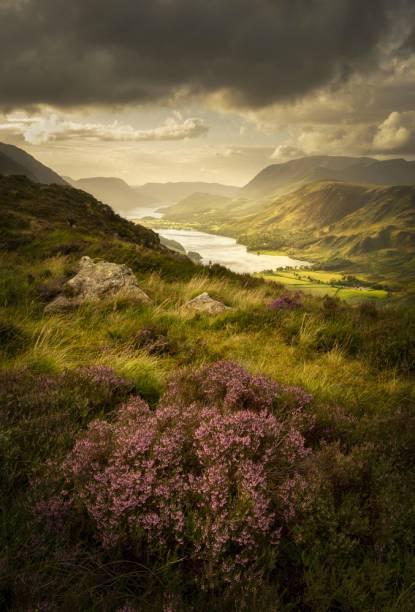 """Buttermere Bloom, The Lake District, Inglaterra - """"A área acima de Buttermere, no Lake District, é um lugar fantástico para uma caminhada com vistas deslumbrantes em todas as direções. Eu configurei minha composição e não me movi por duas horas, as condições eram realmente impressionantes. """""""