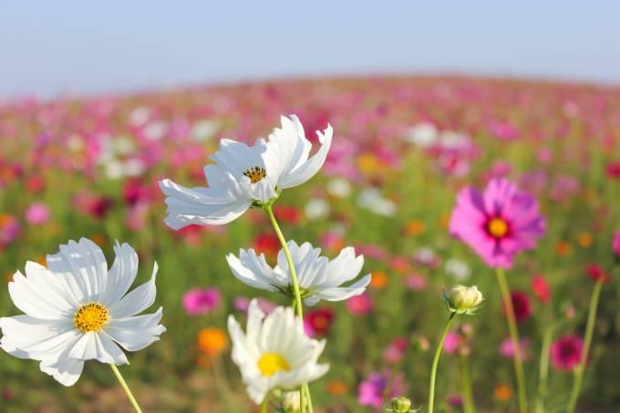 blooming-2417396_1920