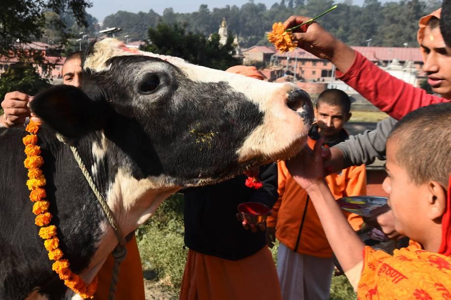 Devotos hindus preparam uma vaca para a adoração, considerada uma encarnação da divindade hindu Laxmi, durante o festival Diwali na cidade de Catmandu, no Nepal - 07/11/2018