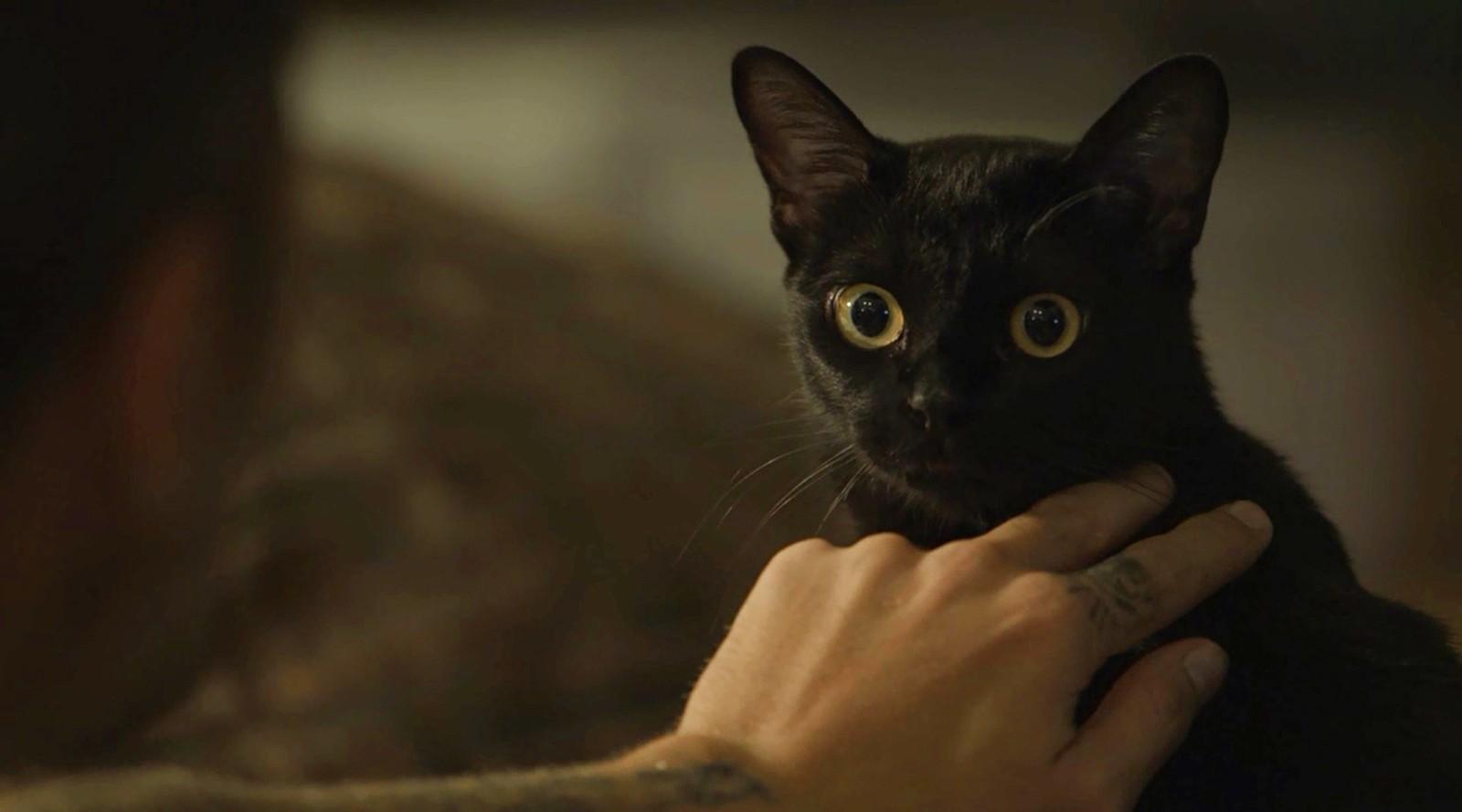 O gato León em 'O Sétimo Guardião'