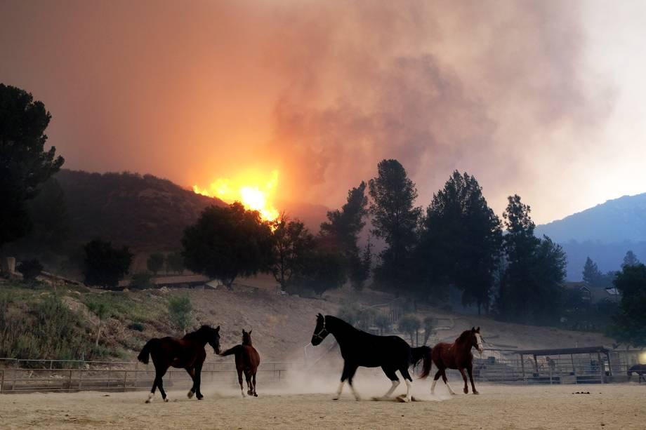 Cavalos são vistos próximos de incêndio florestal nos arredores de Agoura Hills, cidade localizada no estado americano da Califórnia - 09/11/2018