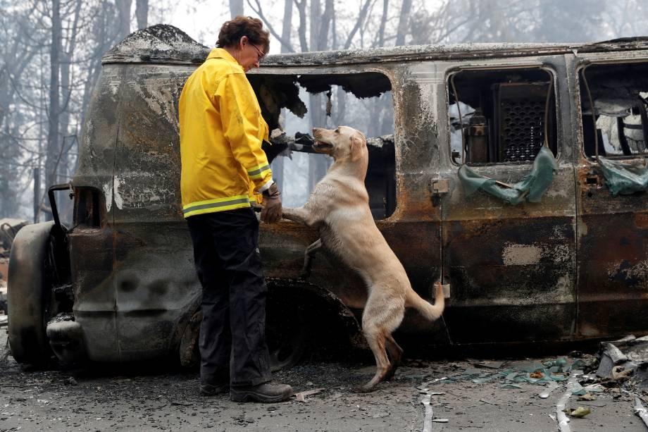 Cão auxilia na identificação de corpos em uma van destruída pelo incêndio Camp Fire em Paradise, na Califórnia - 14/11/2018