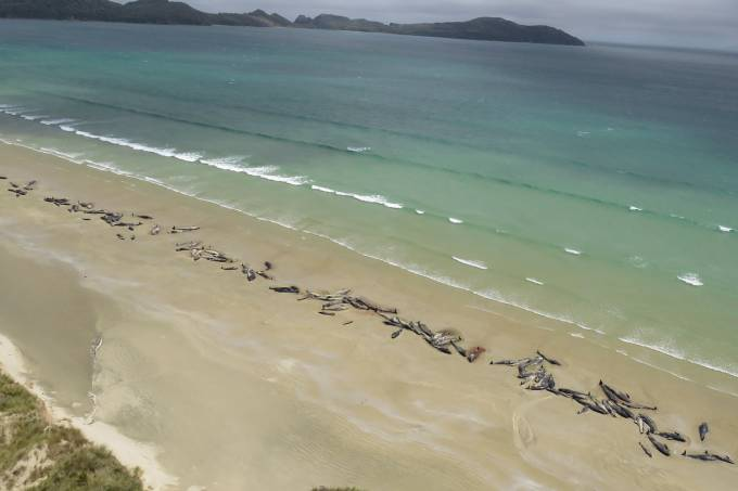Baleias encalham na Nova Zelândia