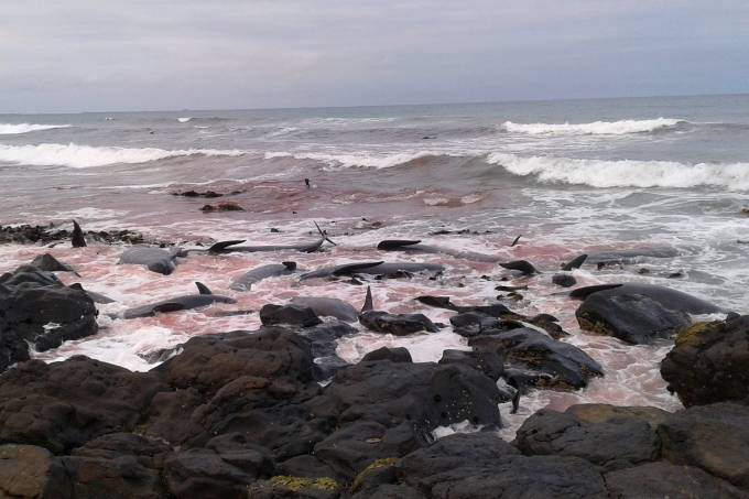 Baleias encalhadas na Nova Zelândia