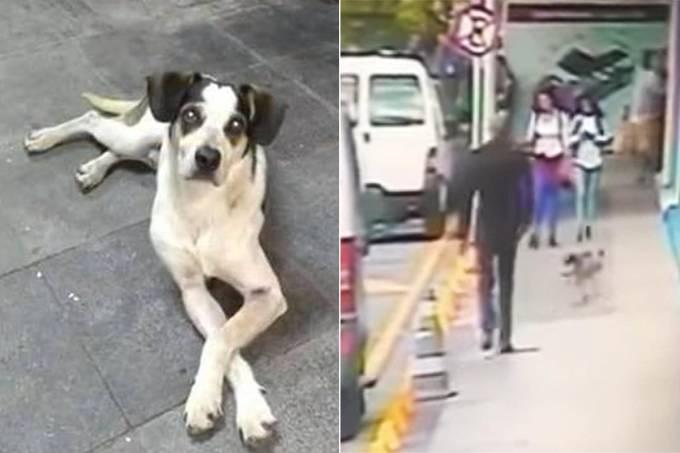 Cachorro Carrefour