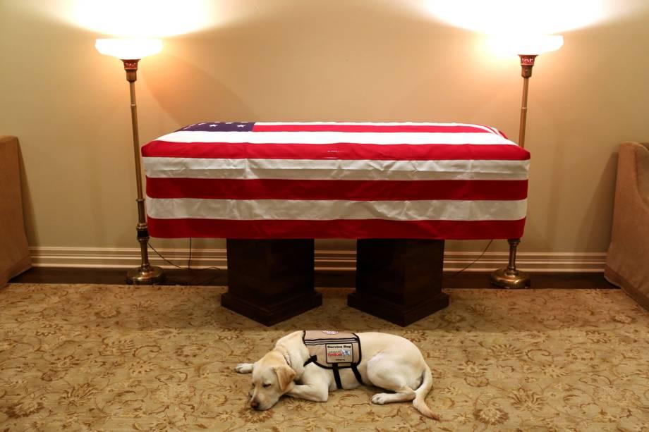 Sully, labrador que ajudava George H.W.Bush em suas atividades, é visto próximo de caixão com o corpo do ex-presidente americano, em Houston, Texas - 03/12/2018