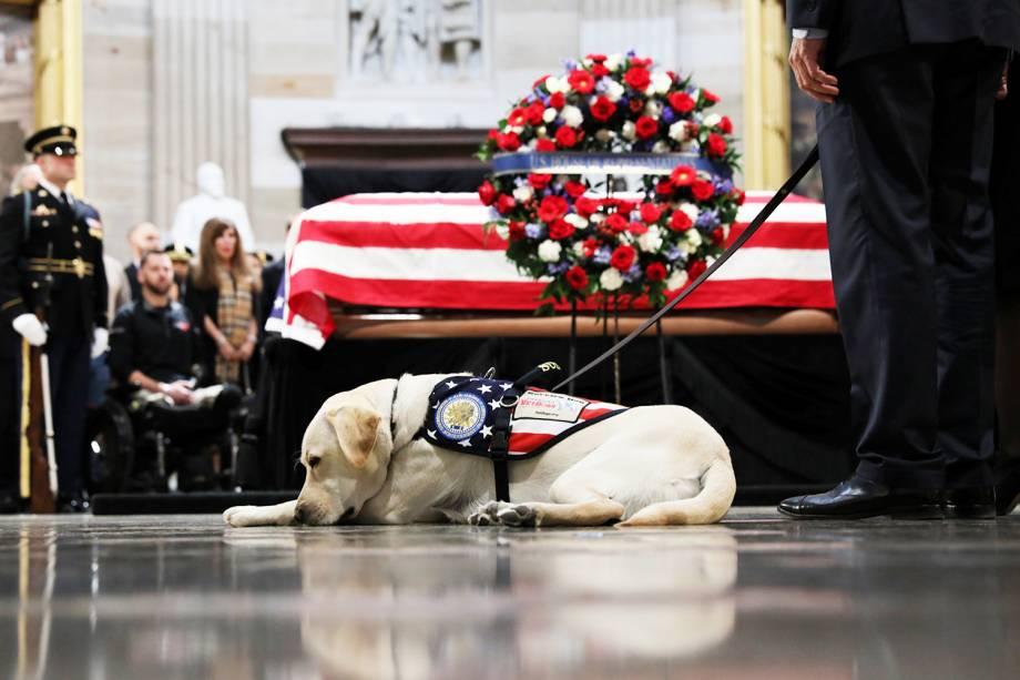 Sully, o labrador que ajudava George H.W.Bush em suas atividades, é visto próximo do caixão do ex-presidente, durante funeral realizado na rotunda do Capitólio americano, em Washington - 04/12/2018