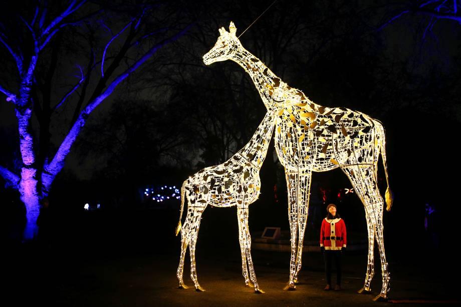Mulher é vista próxima de esculturas de girafa iluminadas no Zoológico de Londres - 22/11/2018