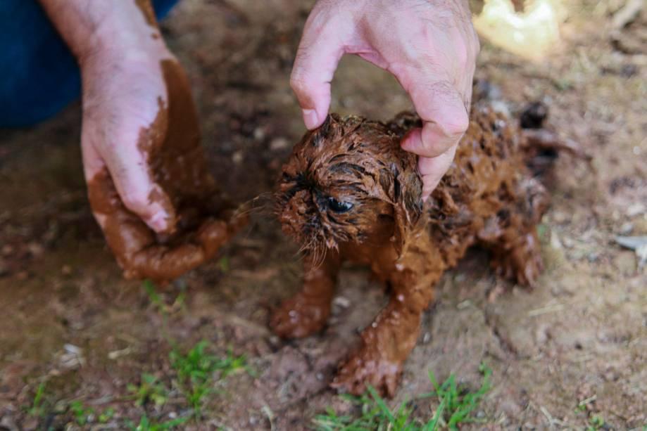 Cachorro é coberto de lama é resgatado após o rompimento de uma barragem na mina de ferro do Feijão, em Brumadinho (MG) - 25/01/2019