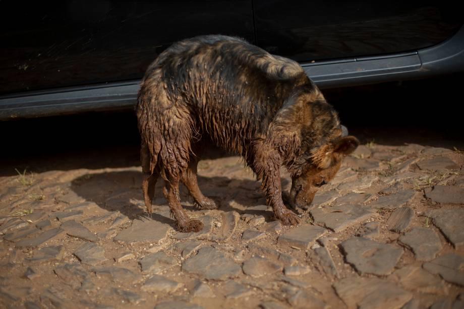 Cachorro coberto de lama é visto na comunidade do Parque da Cachoeira, um dia após o colapso de uma barragem pertencente à mineradora Vale perto da cidade de Brumadinho (MG) - 26/2019