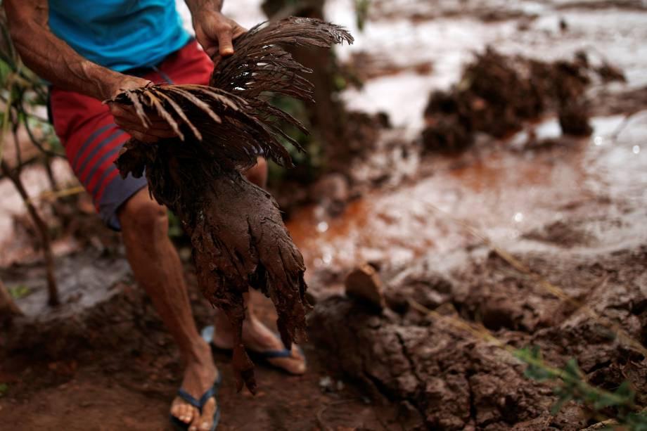 Homem ergue um frango coberto de lama na região afetada pelo rompimento da barragem da mineradora Vale em Brumadinho (MG) - 26/01/2019