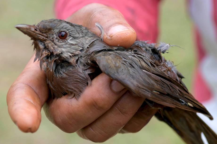 Homem mostra pássaro coberto por lama resgatado após rompimento de barragem da Vale nos arredores de Brumadinho (MG) - 26/01/2019