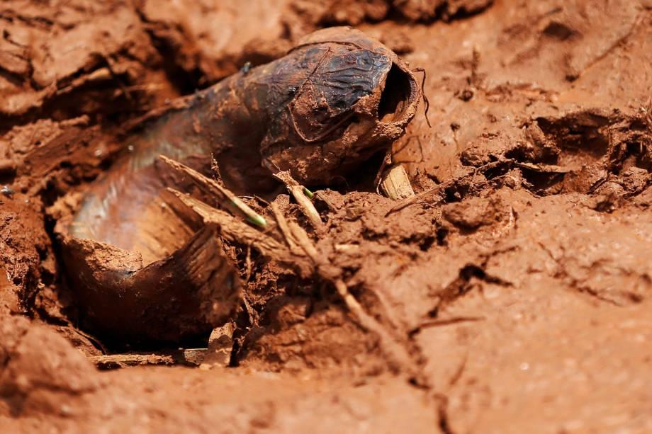 Peixe é visto na lama após rompimento de barragem nos arredores da cidade de Brumadinho (MG) - 27/01/2019