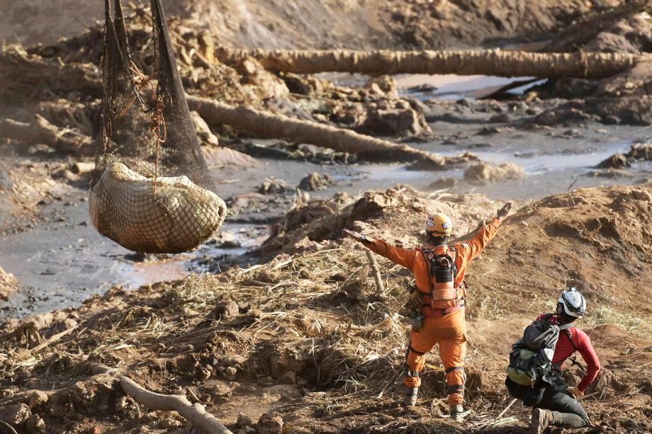 Vaca é resgatada por bombeiros no quinto dia de buscas após o rompimento de barragem da mineradora Vale, em Brumadinho (MG) - 29/01/2019