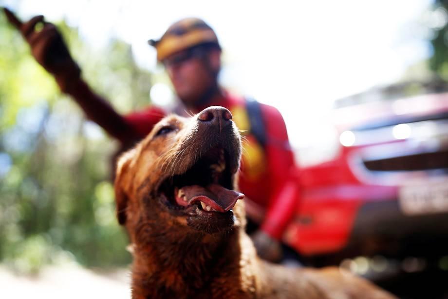 Cão farejador auxilia bombeiro em  operação de resgate de vítimas do rompimento de barragem em Brumadinho (MG) - 30/01/2019