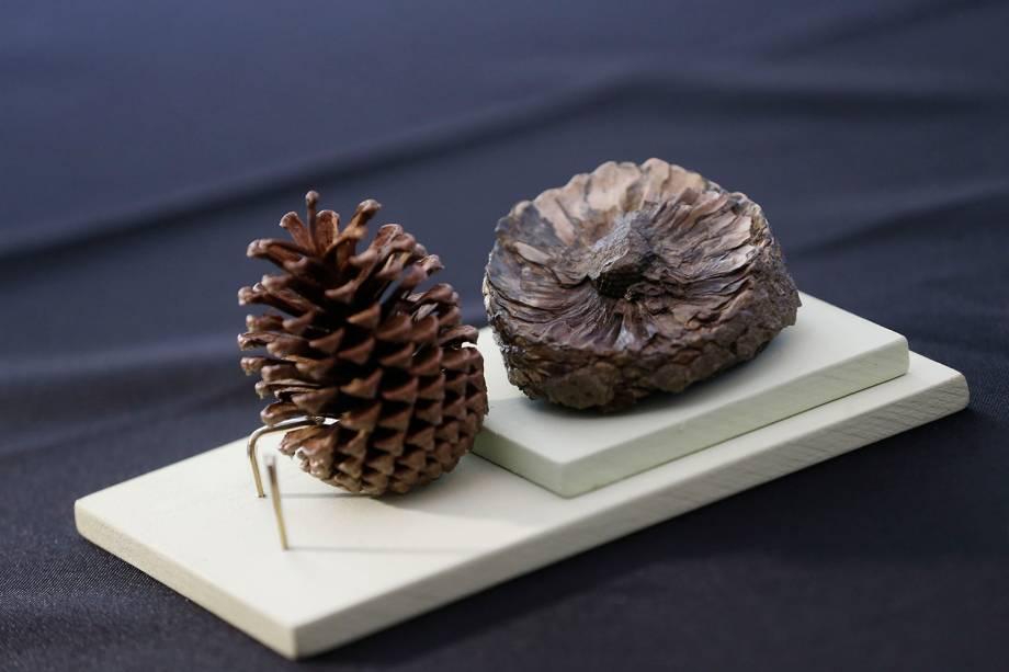 Fóssil de uma pinha encontrada na Antártica vai para exposição 'Quando Nem Tudo era Gelo', organizada pelo Museu Nacional e exposta no Centro Cultural Casa da Moeda, no Rio - 16/01/2019